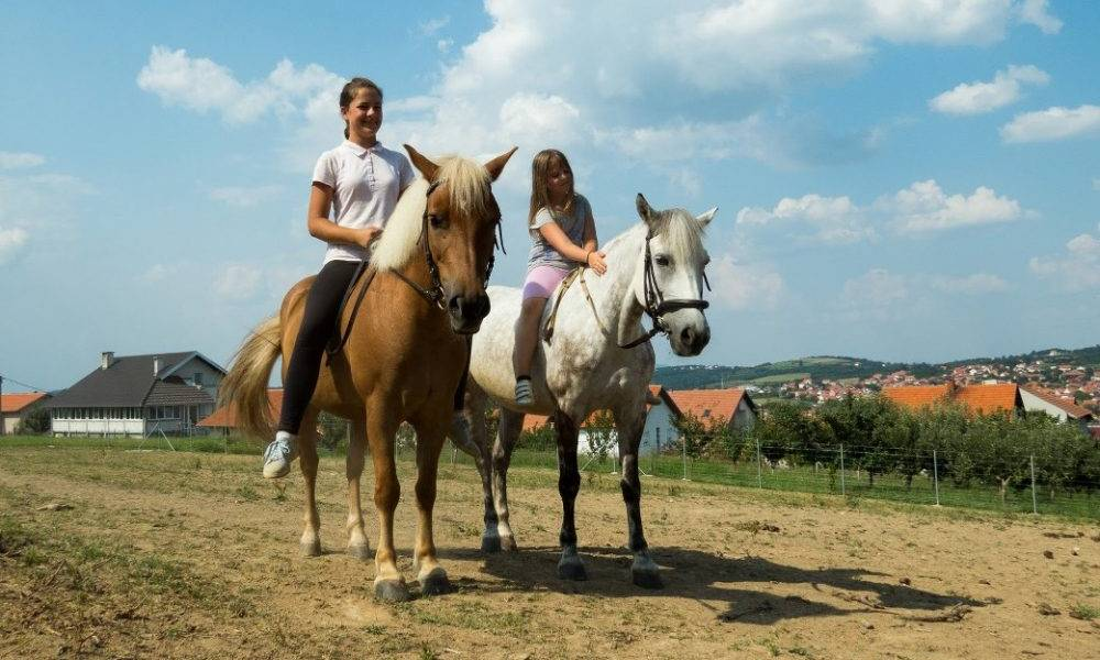 Field horse riding in Belgrade